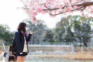 桜と女子高生の写真・画像素材[1777738]