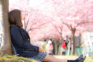桜の樹の下に座り、桜を見つめる女子高生の写真・画像素材[1837042]