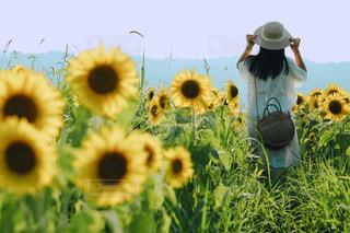 ひまわり畑の女の子の写真・画像素材[2362591]