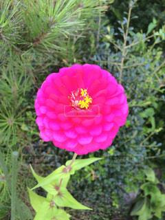 花の写真・画像素材[976319]