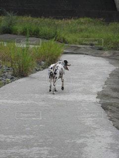 犬の写真・画像素材[43244]