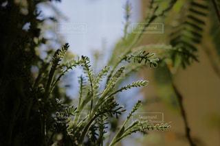 近くの植物のアップの写真・画像素材[977503]