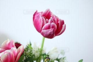一輪の花の写真・画像素材[1027123]