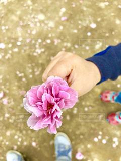 花を持っている手の写真・画像素材[1144043]