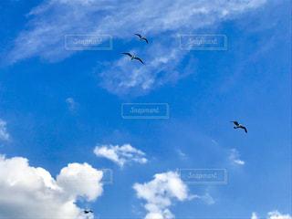 空を飛んでいる鳥の写真・画像素材[1858972]