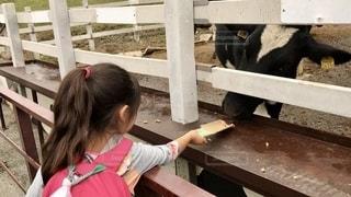 牛さんご飯だよの写真・画像素材[2712603]