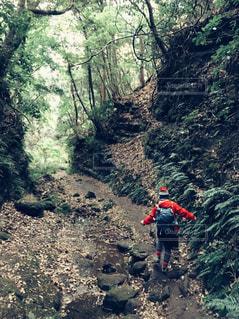 森の横にある山道を歩いて人々 のグループの写真・画像素材[1022696]