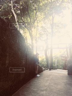 森の逆光の写真・画像素材[978544]