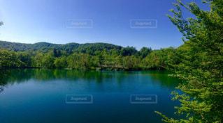 木々 に囲まれた水の大きな体の写真・画像素材[979868]