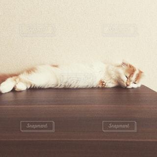 満腹 猫の写真・画像素材[978790]