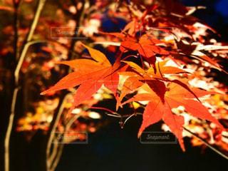 近くの木のアップの写真・画像素材[979158]