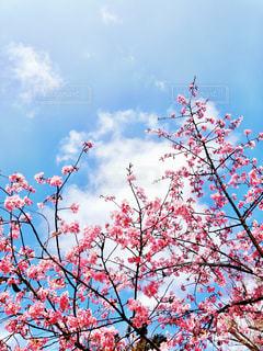春の訪れの写真・画像素材[1048110]