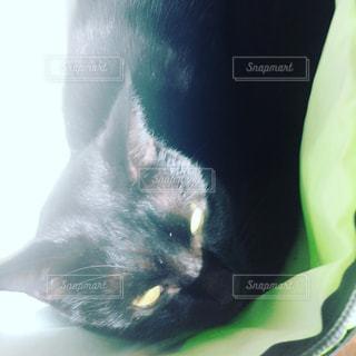 箱猫の写真・画像素材[979412]