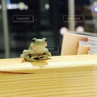 迷い込んだカエル 4の写真・画像素材[979962]
