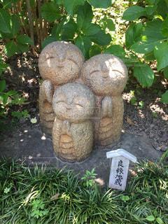 庭の植物 - No.979913