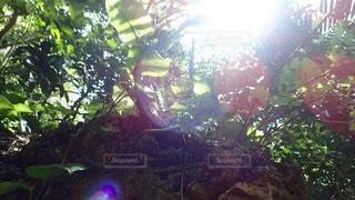 自然の写真・画像素材[56944]