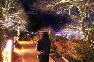 冬のフラワーパークの写真・画像素材[982219]