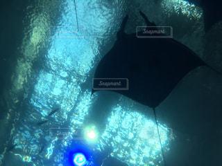 水面下を泳ぐ魚たちの写真・画像素材[1134106]