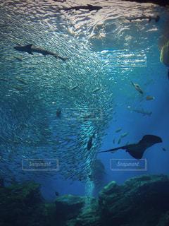 プールの水でカモメの群れの写真・画像素材[1169867]