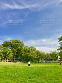 緑の綺麗な公園の写真・画像素材[1192083]