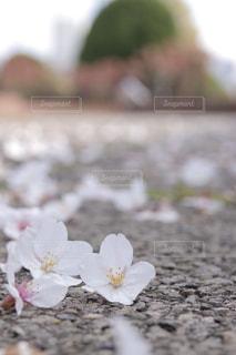 足元の春の写真・画像素材[1880990]