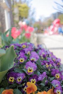 公園の春の写真・画像素材[2007410]
