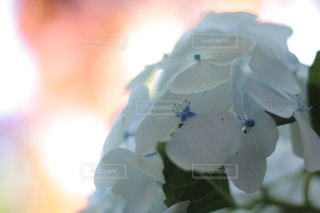 花のクローズアップの写真・画像素材[2228585]