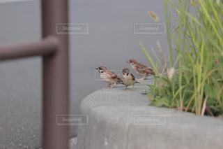 スズメの集会の写真・画像素材[2449633]