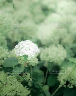 花のクローズアップの写真・画像素材[3463430]