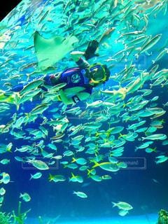 飼育員と魚の写真・画像素材[990837]