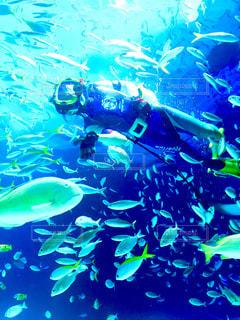 水面下を泳ぐ魚たちの写真・画像素材[990838]