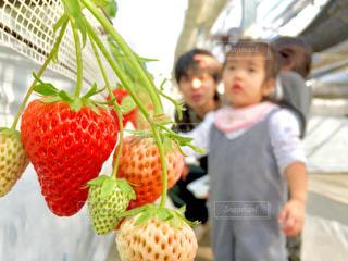 果物の前に立っている人の写真・画像素材[990880]