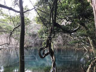 行け、池。の写真・画像素材[982464]