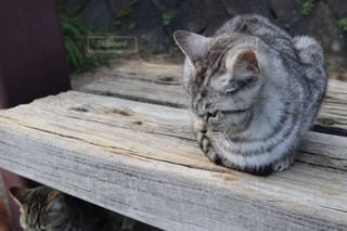 木製のベンチに座っている猫 - No.983897