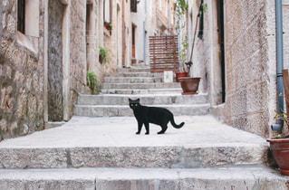 街で見つけた黒猫の写真・画像素材[982769]