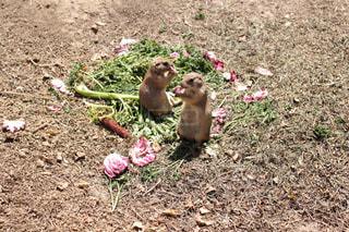動物園のリスの写真・画像素材[984259]