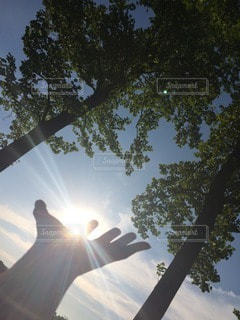 自然の写真・画像素材[12263]