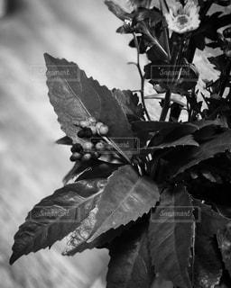 植物と実の写真・画像素材[983762]