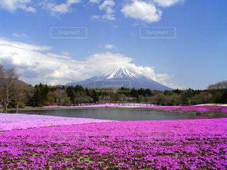富士山と芝桜 - No.1005705