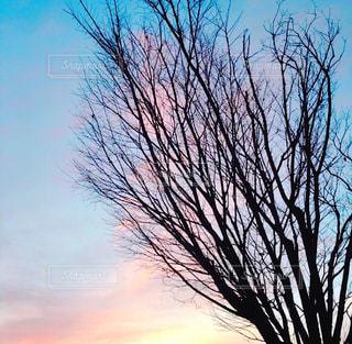 綺麗色の朝焼け - No.1018635