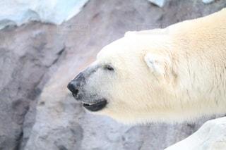 動物園の写真・画像素材[993132]
