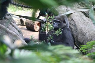動物園 - No.993134