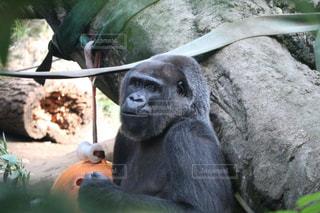 動物園の写真・画像素材[993135]