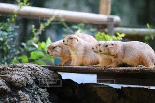 動物園の写真・画像素材[993138]