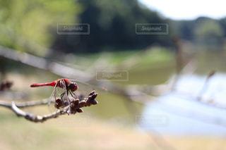 秋の写真・画像素材[994161]