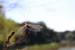 秋の写真・画像素材[994162]