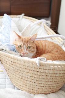 猫ちゃん。の写真・画像素材[1002639]
