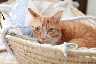 猫ちゃんの写真・画像素材[1002640]