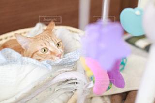 猫ちゃんの写真・画像素材[1002641]