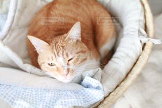猫ちゃんの写真・画像素材[1002643]